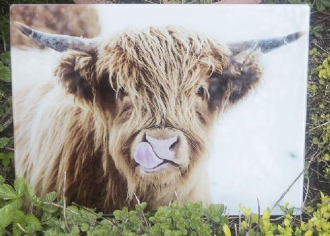 Licky Cow  Highland Cow Glass Chopping Board Large Size Toughened Glass